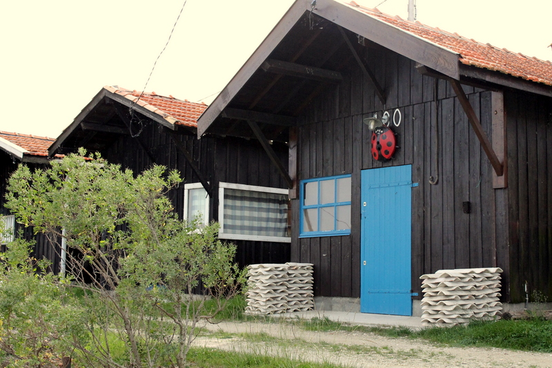 Coccinelle dans la maison signification ventana blog for Aoutats dans la maison